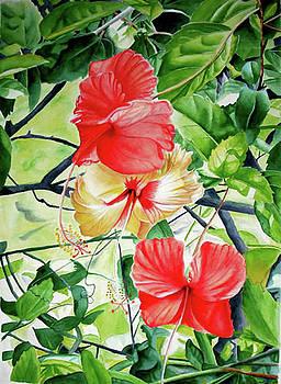 Three Hibiscus by Suzahn King