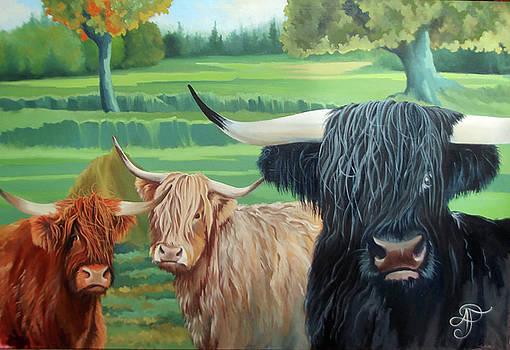 Three Highlanders by Ashley Jennings