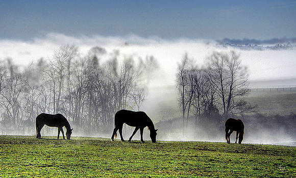 Sam Davis Johnson - Three Horse Morning