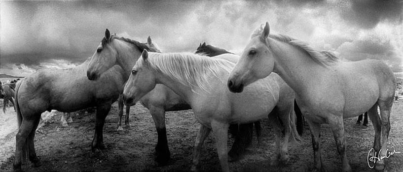 Three Horses Facing East 2 by Christine Hauber