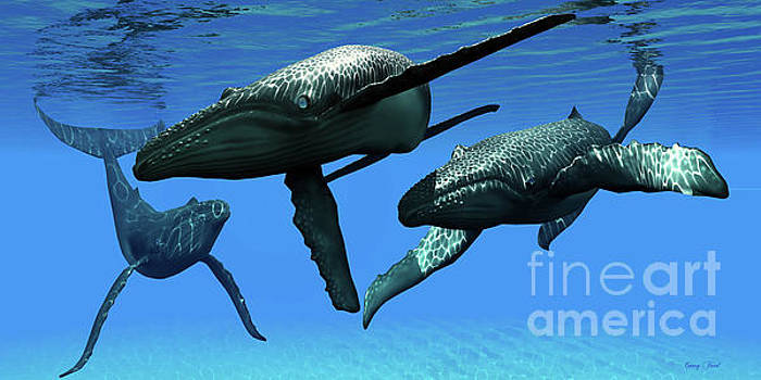 Corey Ford - Three Humpback Whales