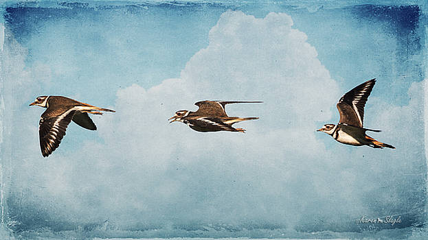 Karen Slagle - Three Killdeer
