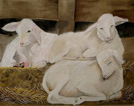 Three lambs by Joan Mansson