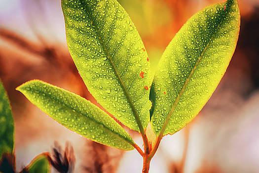 Three Wet Leaves by Bonnie Bruno