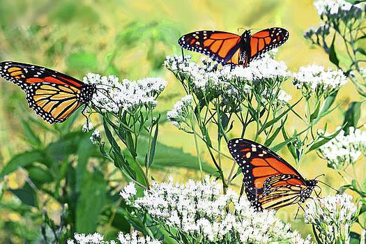 Regina Geoghan - Three MIgrating Monarchs