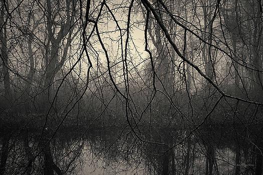 David Gordon - Three Mile River III Toned