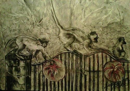 Three Monkeys by Diana Kaye Obe