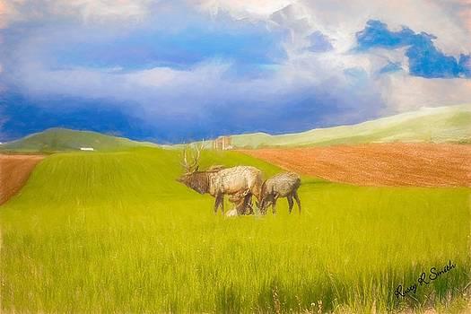 Three Pa. elk feeding. by Rusty R Smith