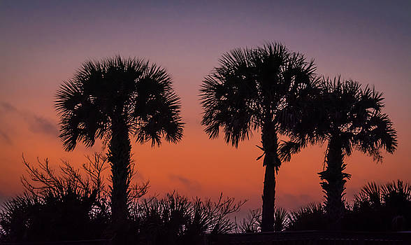 Three Palm Trees by Robert Mitchell