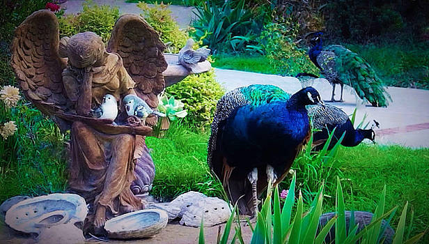 Three Peacocks in the Gardens by Jan Moore