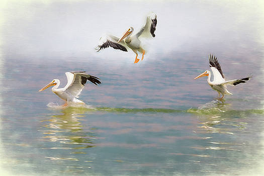 Three Pelicans by James BO Insogna