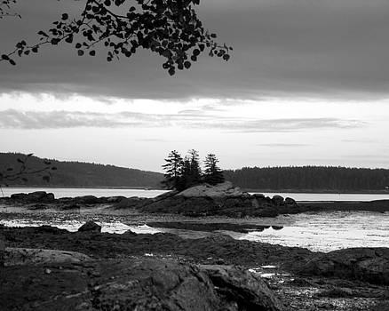 Three Pine Island by Joe Maranzano