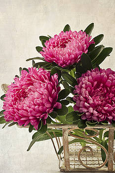 Sandra Foster - Three Pink Asters