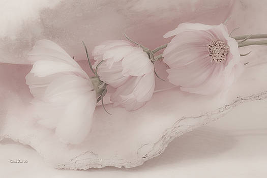 Sandra Foster - Three Pink Cosmo Flowers