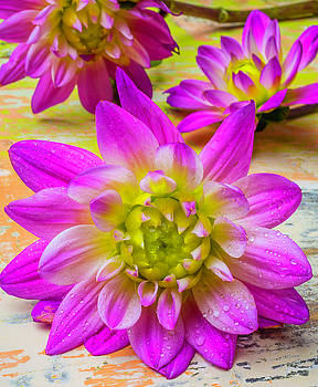 Three Pink Dahlias by Garry Gay