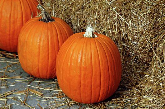 Three Pumpkins by Alynne Landers