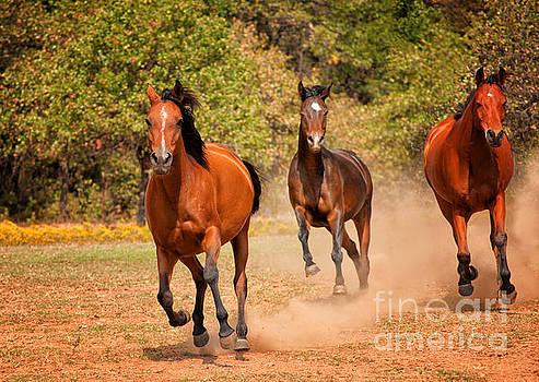 Three Racers by Sari ONeal