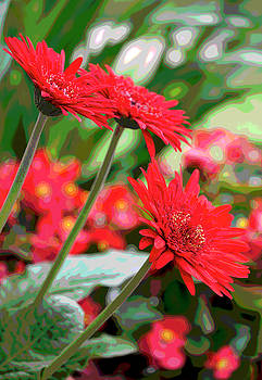 Three Red Gerberas Posterized by Suzanne Gaff
