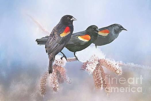 Three Red-Winged Blackbirds in a Row by Janette Boyd