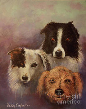 Three Rescued Dogs by Sean Conlon