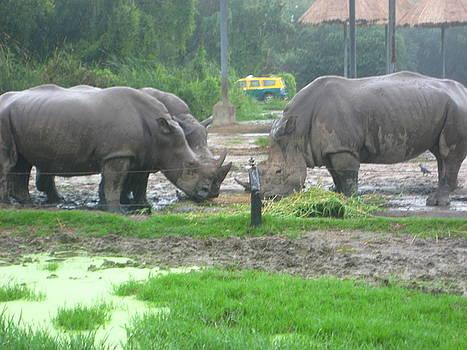 Three Rhinos by Siddarth Rai