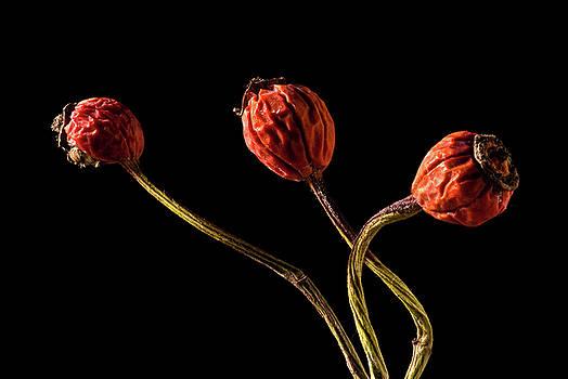 onyonet  photo studios - Three Rose Hips