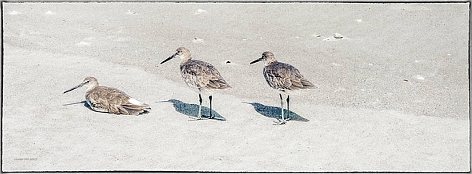 Three Sandpipers by Louise Hill