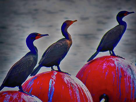 Three Sea Birds On  Bouys HDR by Mario Carta