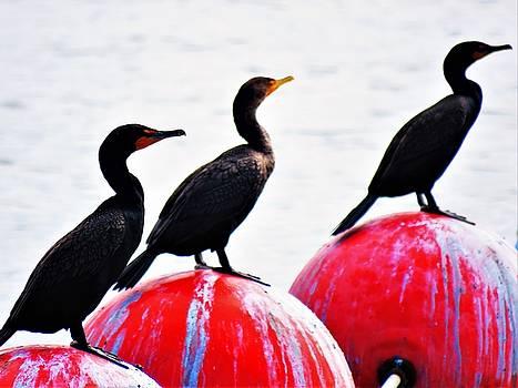 Three Sea Birds On  Buoys by Mario Carta