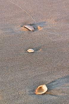Three Shells by Willard Killough III