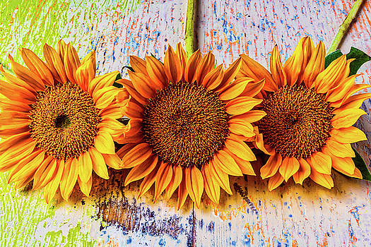 Three Sunflowers Still Life by Garry Gay