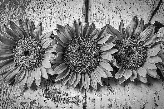 Three Sunflowers Still Life In Black And White by Garry Gay