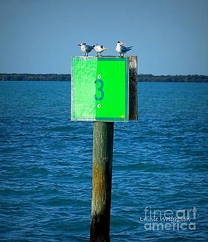 Three Terns On A Three by Lainie Wrightson