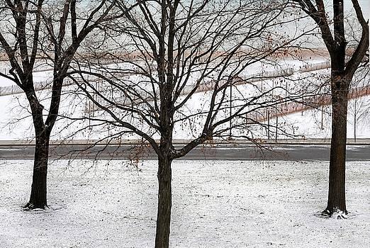 Three Trees by Dan Holm