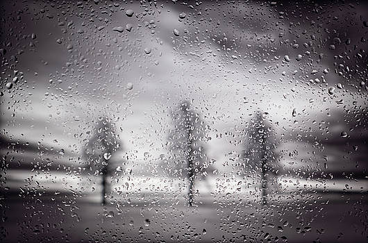 Three Trees In BW on a Rainy Day by Steve Gadomski