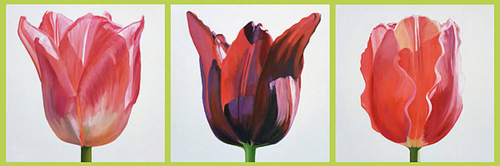 Three Tulip Portraits by Kathy Armstrong
