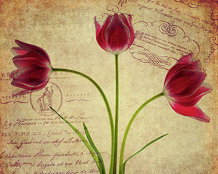 Three Tulips Letter by Rebecca Cozart
