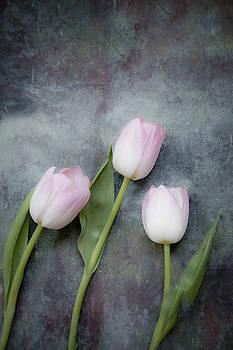 Three tulips by Maria Heyens