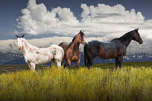 Randall Nyhof - Three Western Horses