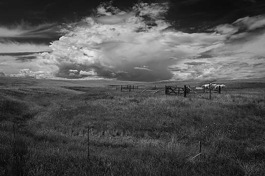 Rick Strobaugh - Three White Horse and Corral BW