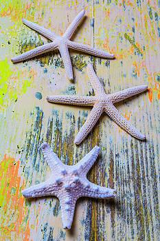 Three White Starfish by Garry Gay