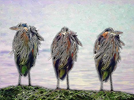 Three wise herons by Darryl Luscombe