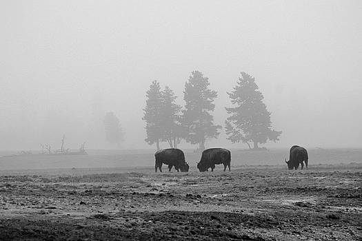 Threes in the Fog Black and White by Bruce Gourley