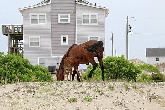 Thristy Foal by David Stasiak