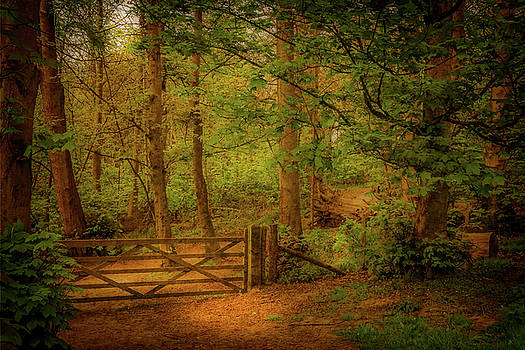 Through the gate by Bren Ryan