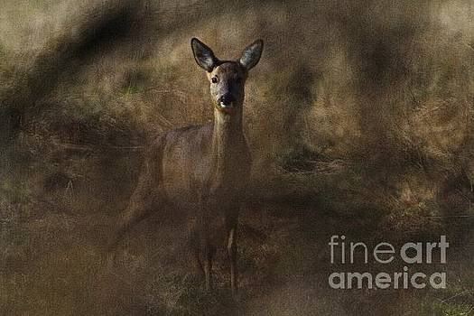 Through the hedge row  by Gary Bridger
