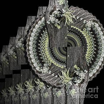 Through the Lichen Glass by Karen Jordan Allen
