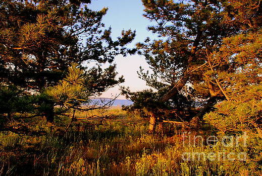 Through the Pine grove by Lennie Malvone