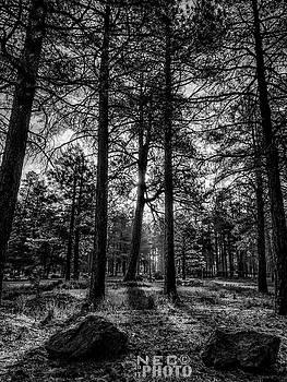 Through the Tree by Niko Lancaster