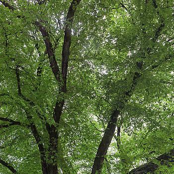Cliff Wassmann - Through the Trees